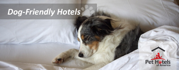 dog friendly bed and breakfast 3
