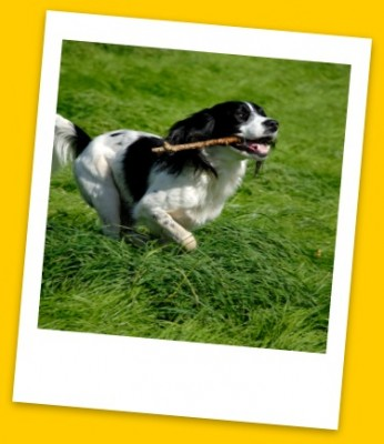 It is easy to find a pet kennel using our extensive listings