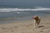 Newport Beach is a great place to visit when traveling with pets