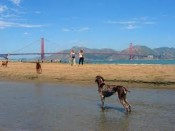 The beaches are pet friendly so traveling with pets to San Francisco is fun and eventful
