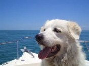 Owners love traveling with pets to Tampa with all the fun outdoor activities available