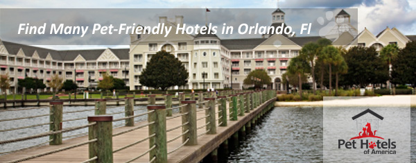 Pet Friendly Hotels Orlando Stretch Your Imagination