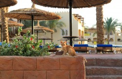 Pet Hotels of America offers tips on Traveling With Cats