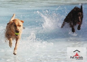 Image of dogs romping around in the waves at a dog friendly beach