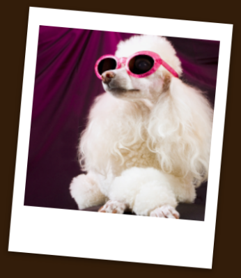 Pet hotels of America has many pet friendly hotels in Las Vegas, where dogs and cats can enjoy the good life.