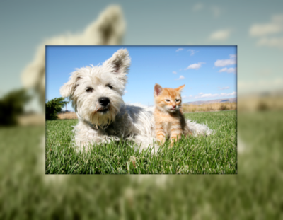 Cat and dog visiting one of the many local kennels at Pet Hotels of America