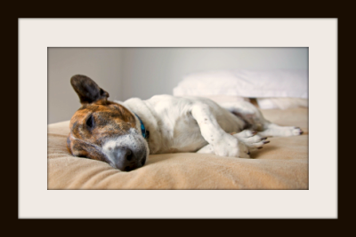 Find Pet Friendly Motels In All U S Cities At Pet Hotels Of America