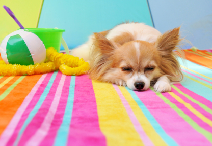 Dog travel is made easy at Pet Hotels of America