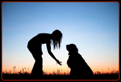 Find outdoor dog kennels easily at Pet Hotels of America