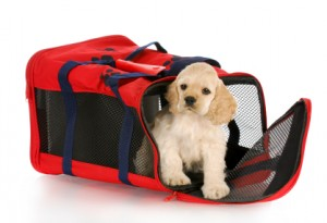 Cute little puppy is in a travel carrier to be used on a pet airlines.