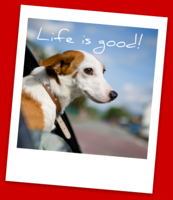 Make pet-friendly travel simple by using Pet Hotels of America's reservation services