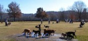 If traveling with pets to Atlanta, Piedmont Dog Park should be on your list of places to visit.