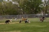Dog parks are plentiful if you are planning some pet travel to Columbus