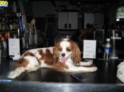 When traveling with pets to Charlotte, the Dog Bar is a must