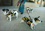 If traveling with pets to Pittsburgh, plan on them becoming Steelers fans.