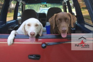 pets traveling to pet friendly accommodation establishment