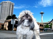 Photo visiting Seattle with Pets as shown at Pet Hotels of America