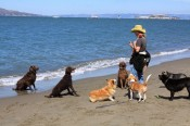 Dogs on a San Francisco Beach