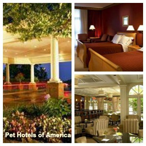 Pet friendly hotels in Nashville include Sheraton Music City