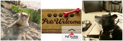 hotels that are pet friendly photo