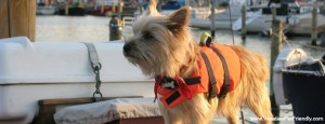 Dog on boat at Vacation Pet Friendly website