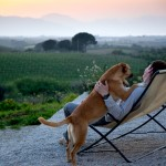 man overlooking vineyard with his dog